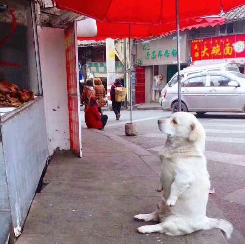 The dog is waiting for something}}